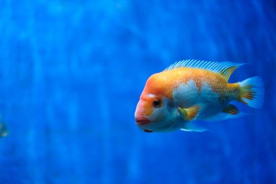 画像はstock.xchngより。美味しいお魚が食べたーい。