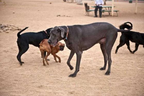 周囲の犬がネズミほどのサイズに…。
