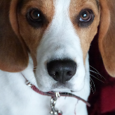 他人の犬に残飯あげるのはNGか? 変わるペットと人間の距離