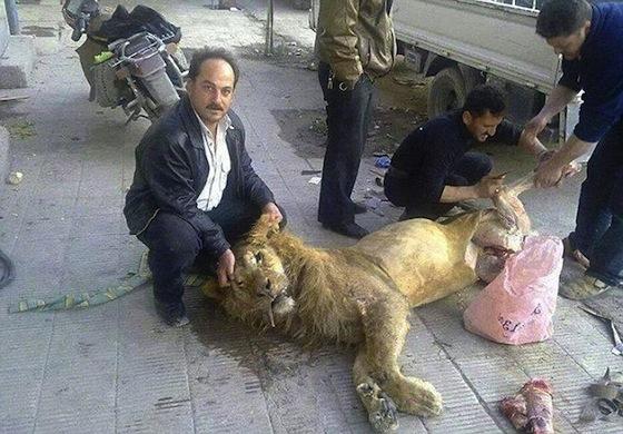 シリアではライオンも人も悲惨な状況が続いている。