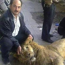 シリア食糧難でライオン焼き肉にされる 犬、猫食べてよいとの勧告も