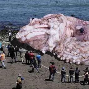 「50m級の超ダイオウイカが発見」 米国で50万リツイートのガセ写真