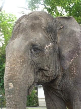 ※かわいいオスの象さんは、とにかくくさい…。