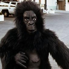 ゴリラに扮した動物園職員が撃たれ重傷 動物逃走時の訓練中