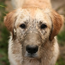 犬は猫よりも家に損害与える 超かわいい…けど年間4万円も負担増?