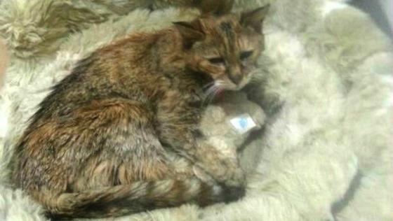 ※世界最高齢のネコだったポピーちゃん。