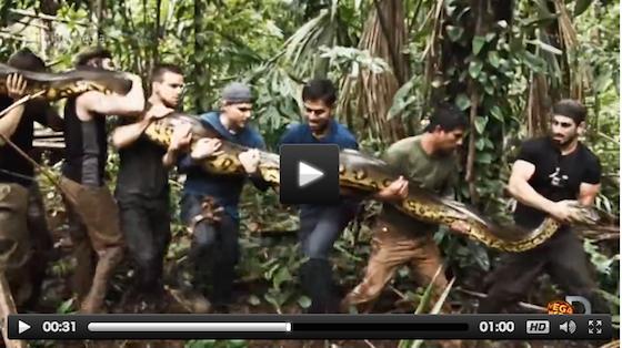 捕らえられた大蛇。