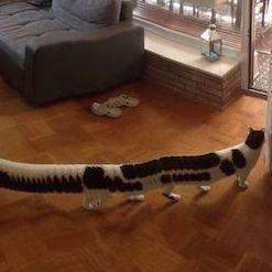 猫をパノラマ撮影したら猫バス状態に!!! 足が18本で胴がなが〜い姿が可愛すぎてヤバい!!!!