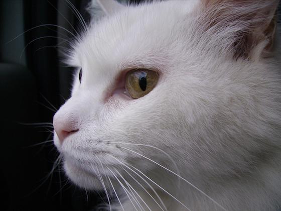 猫と人間はかりそめの友情で結ばれている?