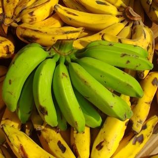 バナナ絶滅の危険性が増大、不治の病が蔓延 バナナが遠足の弁当から消える日は近い?