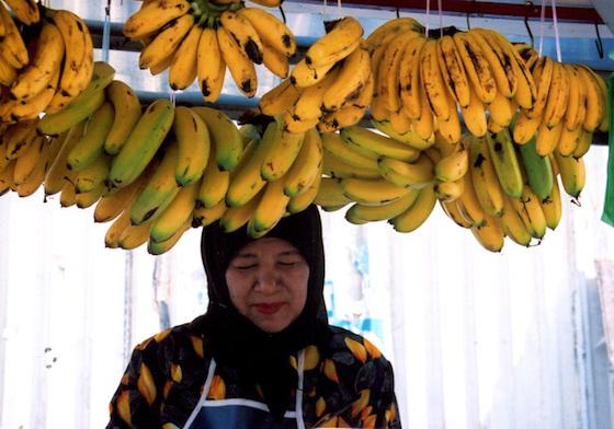 安くて美味くて庶民の味方、そんなバナナはいつかセレブの食べ物に…いや誰も食べられなくなるかも知れない。