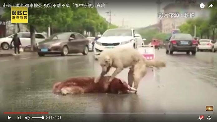 車にひかれた犬を、もう一匹の犬が起こそうとし続ける… 泣けてしまいすぎると全世界で大きな話題に