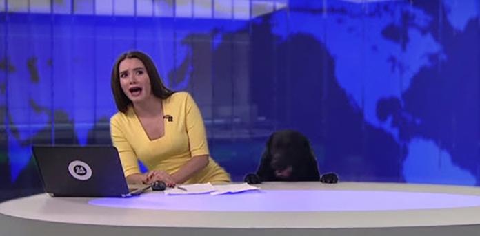 女子アナがニュース生放送中、犬が乱入 U・ω・U 全世界の犬好きが絶賛する放送事故に!!!