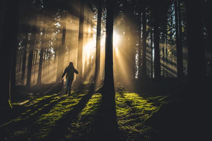 Francfranc、ショッピングバッグ削減プロジェクト 坂本龍一の森林保全団体に寄付を行う