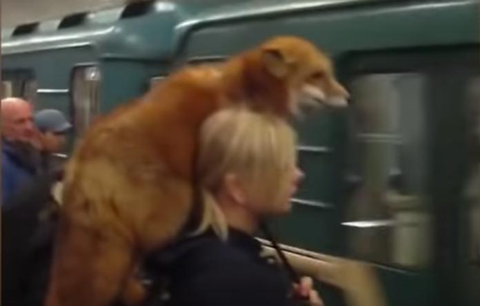 ロシアで肩にキツネ乗せた女性02